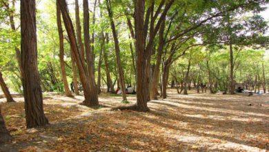 تصویر از اقدامات حفاظتی در جنگلها و مراتع کشور تشدید می شود
