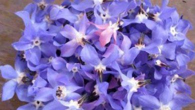 تصویر از نیاز صنعت گل و گیاه به توجه بیشتر