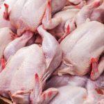 گوشت مرغ