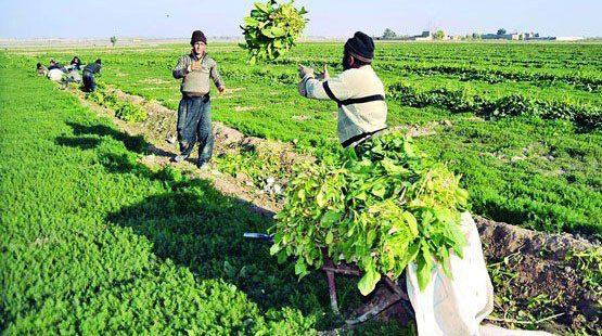حذف معافیت مالیاتی بخش کشاورزی