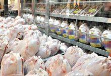 تصویر از ناهماهنگی ۲ وزارتخانه عامل آشفتگی بازار مرغ
