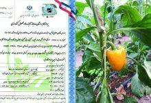 تصویر از آغاز اعطای نشان حد مجاز آلایندهها به ۵۰ محصول کشاورزی