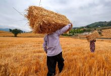 تصویر از رئیس کمیسیون کشاورزی اتاق تعاون ایران: تشکلهای عضو شورای قیمتگذاری شبهدولتیاند