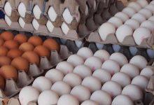 تصویر از یک مقام مسئول: عرضه تخم مرغ با قیمت شانهای ۳۴۰۰۰ تومان آغاز شد