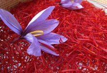تصویر از حسینی: صادرات زعفران رکورد زد/ حداکثر نرخ هر کیلو زعفران ۱۵ میلیون تومان