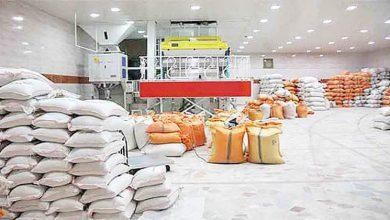 تصویر از ضرورت واردات ۷۰۰ هزار تن برنج طی ۴ ماه آینده/ قیمت هر کیلو برنج هندی بالای ۲۰ هزار تومان