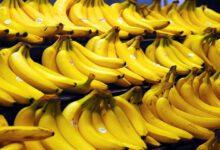 تصویر از معاون گمرک خبر داد؛ واردات موز در قبال صادرات سیب از سر گرفته میشود