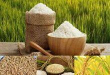 تصویر از مرکز آمار اعلام کرد؛ افزایش ۴۰ درصدی قیمت برنج در پاییز ۹۹