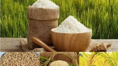 تصویر از درخواست کاهش یا حذف دوره ممنوعیت واردات برنج /برنج خارجی تقاضا ندارد