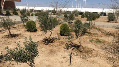 تصویر از گسترش فضای سبز بندرخشک پیشگامان با کاشت ۱۰۰۰ اصله نهال