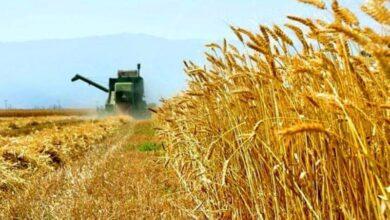 تصویر از بررسی قیمت گندم در جلسات آتی کمیسیون مجلس