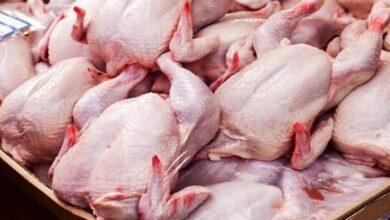 تصویر از ۲ نرخی بودن قیمت مرغ تنها علت نابه سامانی بازار/ نرخ هر کیلو مرغ ۳۵ هزار تومان