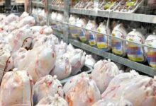 تصویر از ۲ دلیل گمرک برای ترخیص نشدن محموله مرغ