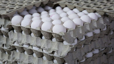 تصویر از هشدار اتحادیه مرغ تخمگذار درباره تولید تخم مرغ