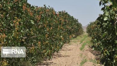 تصویر از خشکسالی و سرمازدگی ۵۴ هزار میلیارد ریال به کشاورزی کردستان خسارت زد