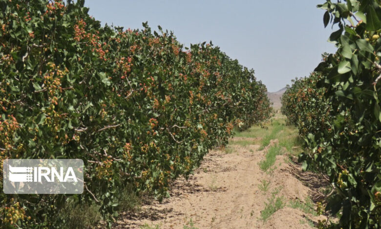 باغات کردستان