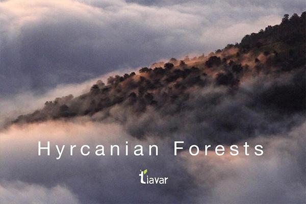 تیاور احیاء جنگل های هیرکانی